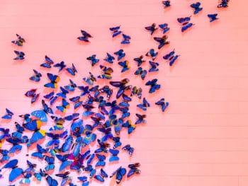 Unleash Your Inner Butterflies