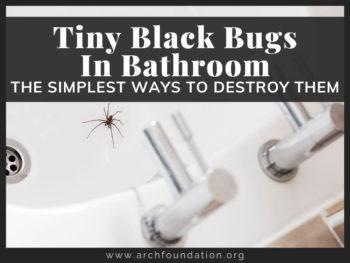 Tiny Black Bugs
